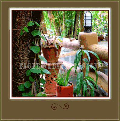 We are still plnating and moving pots at the House of Happinez Lodge at Ranong in Thailand